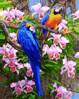 Schilderen op nummer Papagaaien
